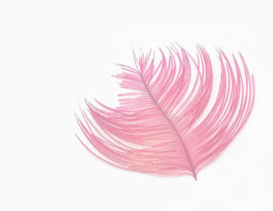 feather image final